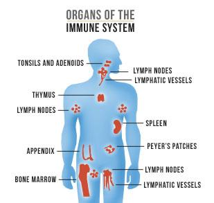 Immunforsvaret skal vedligeholdes